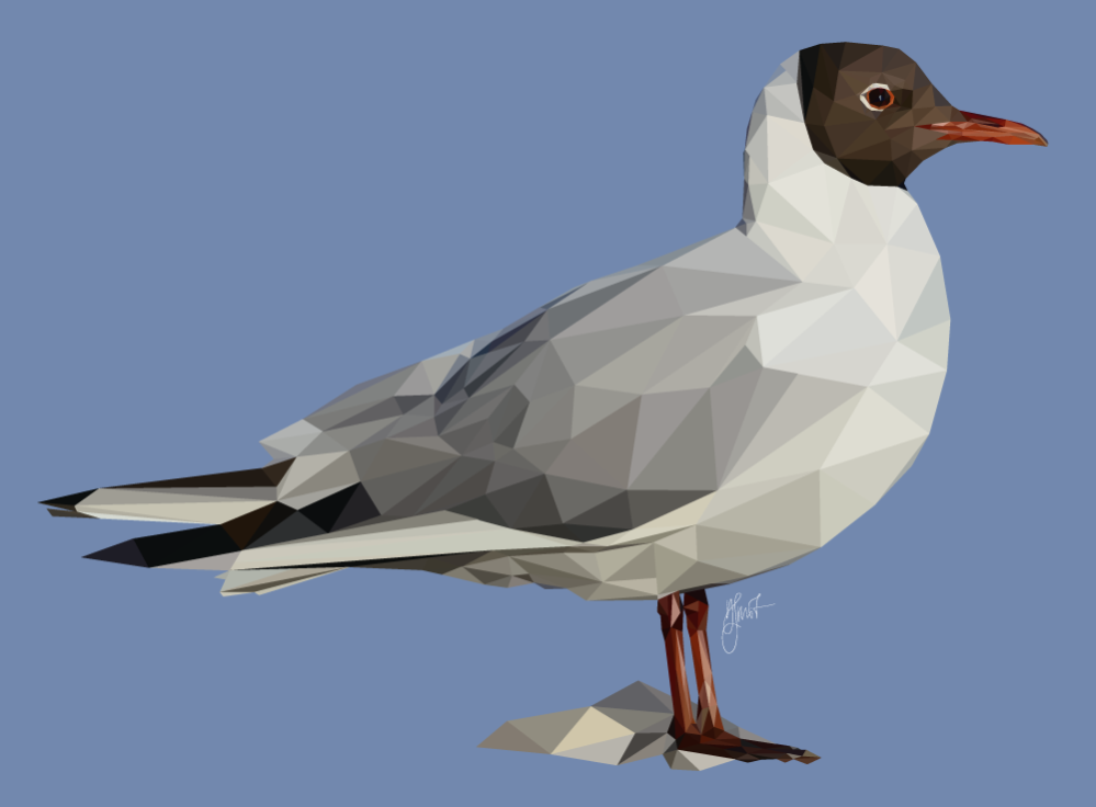 Black-heade gull, low poly, www.schmitzl.nl